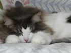 猫が大好きな院長夫妻の猫です♪